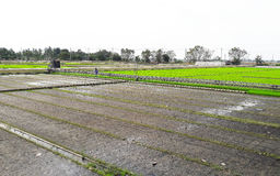 Völlig und ohne Reisfeld Stockbild