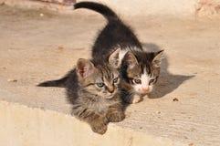 vänta för kattunge Arkivbild