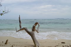 V. A beautiful stranded log on the beach of Praslin, Seychelles Stock Photography