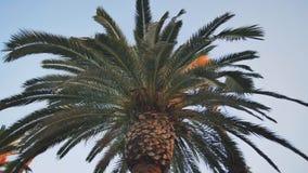 V?deo de las palmeras del ?rbol en el movimiento con la estabilizaci?n electr?nica en el parque de Barcelona metrajes