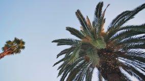 V?deo de las palmeras del ?rbol en el movimiento con la estabilizaci?n electr?nica en el parque de Barcelona almacen de video
