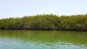 v?deo 4K de mangles en el delta del r?o tropical almacen de metraje de vídeo