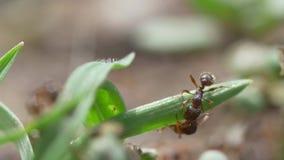 V?deo macro das formigas video estoque