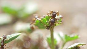 V?deo macro de las hormigas almacen de video