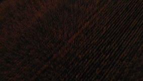 V?deo a?reo El volar cerca sobre campo de trigo amarillo extenso en la naturaleza id?lica del C?ucaso en la puesta del sol ligera metrajes