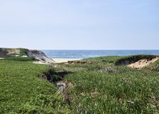 V?g?tation verte au-dessus des dunes avant l'oc?an image stock