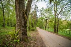 V?g till och med skog royaltyfria foton
