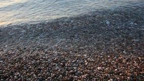 V?grulle p? stranden arkivfilmer