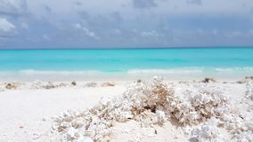 V00871 Maldives beautiful beach background white sandy tropical paradise island with blue sky sea water ocean 4k Stock Photography