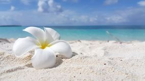 V02847 Maldives beautiful beach background white sandy tropical paradise island with blue sky sea water ocean 4k flower Stock Photography