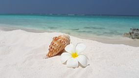 V02611 Maldives beautiful beach background white sandy tropical paradise island with blue sky sea water ocean 4k flower Stock Images