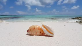 V02361 Maldives beautiful beach background white sandy tropical paradise island with blue sky sea water ocean 4k shell stock video footage