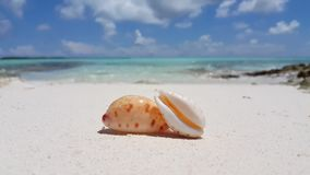 V02361 Maldives beautiful beach background white sandy tropical paradise island with blue sky sea water ocean 4k shell Royalty Free Stock Photography