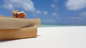 V07544 Maldives white sandy beach reading book seashell on sunny tropical paradise island with aqua blue sky sea water Royalty Free Stock Images