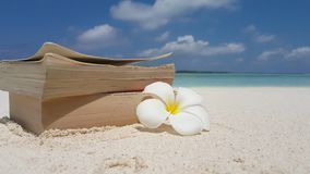 V07597 Maldives white sandy beach reading book on sunny tropical paradise island with aqua blue sky sea water ocean 4k. Maldives white sandy beach reading book Royalty Free Stock Image