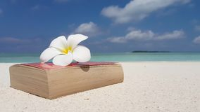 V07557 Maldives white sandy beach reading book yellow flower on sunny tropical paradise island with aqua blue sky sea Stock Images