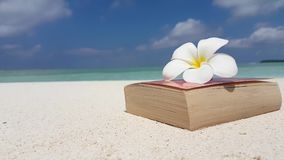 V07545 Maldives white sandy beach reading book yellow flower on sunny tropical paradise island with aqua blue sky sea Royalty Free Stock Images