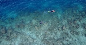 V11902 many people young boys girls snorkeling over coral reef with drone aerial flying view in crystal clear aqua blue. Many people young boys girls snorkeling stock video
