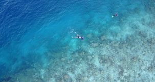 V11784 many people young boys girls snorkeling over coral reef with drone aerial flying view in crystal clear aqua blue. Many people young boys girls snorkeling stock video