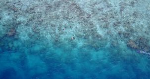 V11787 many people young boys girls snorkeling over coral reef with drone aerial flying view in crystal clear aqua blue. Many people young boys girls snorkeling stock video
