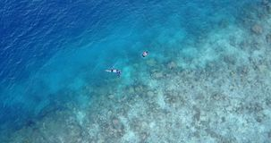 V11901 many people young boys girls snorkeling over coral reef with drone aerial flying view in crystal clear aqua blue. Many people young boys girls snorkeling stock footage