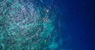 V11863 many people young boys girls snorkeling over coral reef with drone aerial flying view in crystal clear aqua blue. Many people young boys girls snorkeling stock video footage