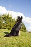 V?nta p? anvisningar fr?n min f?rlage En hund väntar överst av en kulle som söker efter dess förlage arkivbilder