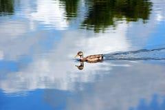 Vôo azul Fotos de Stock Royalty Free