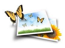 Vôo da borboleta fora dos retratos da fotografia da natureza Fotografia de Stock
