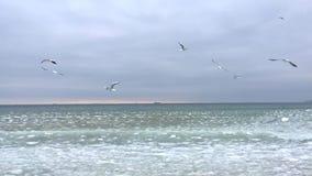 Vôo da gaivota sobre o mar filme
