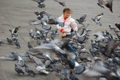 Vôo de pombos Fotografia de Stock