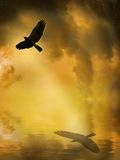 Vôo do pássaro Fotografia de Stock Royalty Free