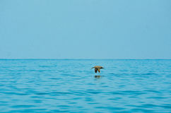 Vôo do pássaro sobre o oceano imagem de stock
