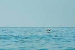 Vôo do pássaro sobre o oceano imagens de stock royalty free