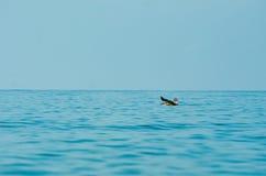 Vôo do pássaro sobre o oceano foto de stock