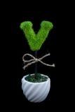 V piante del carattere su fondo nero fotografia stock