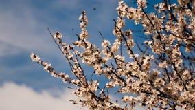 V?rblomningbakgrund Den h?rliga naturplatsen med det blommande tr?det och solen blossar solig dag arkivbild