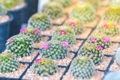 V?rias plantas do cacto e da planta carnuda fotografia de stock royalty free