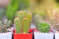 V?rias plantas do cacto e da planta carnuda fotografia de stock