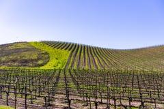 V?rlandskap av ving?rdar som t?cker kullarna av centrala Kalifornien arkivfoton