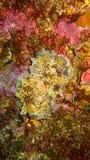 V som är undervattens- i Nya Zeeland royaltyfri bild