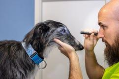V?t?rinaire faisant un balayage ophthalmologique d'un l?vrier photographie stock libre de droits
