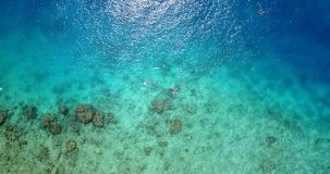 V09299 two 2 people young couple snorkeling over coral reef with drone aerial flying view in crystal clear aqua blue. Two 2 people young couple snorkeling over stock video footage