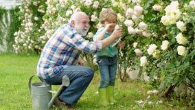 v?xande v?xter Familjutveckling och förbindelsebegrepp Barnet är i trädgården som bevattnar de rosa växterna farfar arkivfilmer