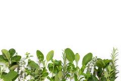 V?xt- sidor f?r krydda och chilipeppar p? vit bakgrund Gr?nsakmodell Blom- och gr?nsaker p? vit bakgrund Top besk?dar fotografering för bildbyråer