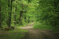 森林路径v3 免版税库存照片