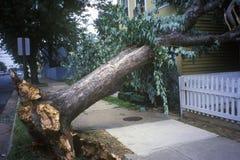 龙卷风损伤,在两个房子之间的被击倒的树,亚历山大, VA 免版税库存图片