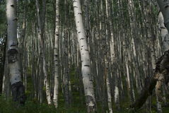 Va comment votre Aspen Photos libres de droits