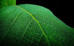 va el verde Fotografía de archivo libre de regalías