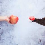 Va il vegano! Concetto del veganismo Dieta del vegano Mano umana con la mela Fotografie Stock